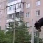 rottweiler jump