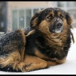 snowdogfeat