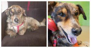 dog-was-stuck-in-tar-healed