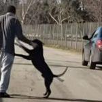 dogcar2_1000x523-768×402