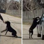dogcar_1000x523-768×402