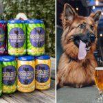 good-boy-dog-beer-feature-940×705