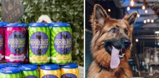 Good Boy Dog Beer