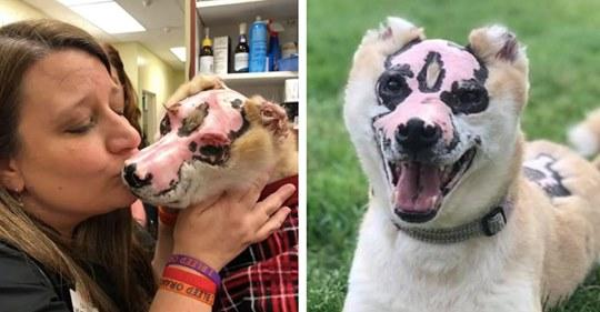 dog-with-burns