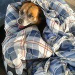 dog bus stop blanket