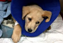 tortured Buddy recovering