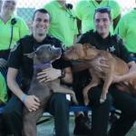 injured dog love