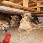 Dogs of Nassau, Bahamas