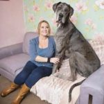 the tallest dog in the world with owner