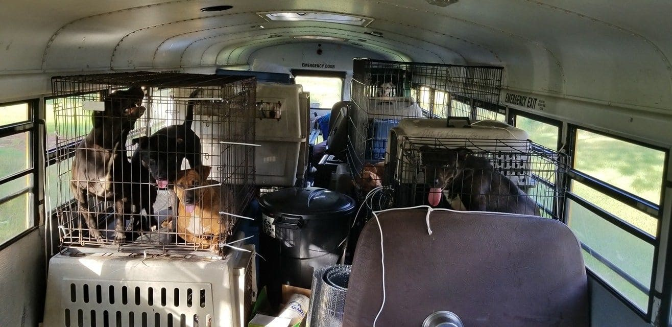 sheltered animals en route