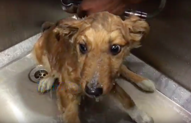 stray puppy bath