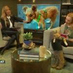 stray puppy on TV