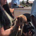 sick puppy rescue