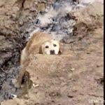 missing senior dog sad