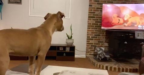 Luna, the emotional pup,