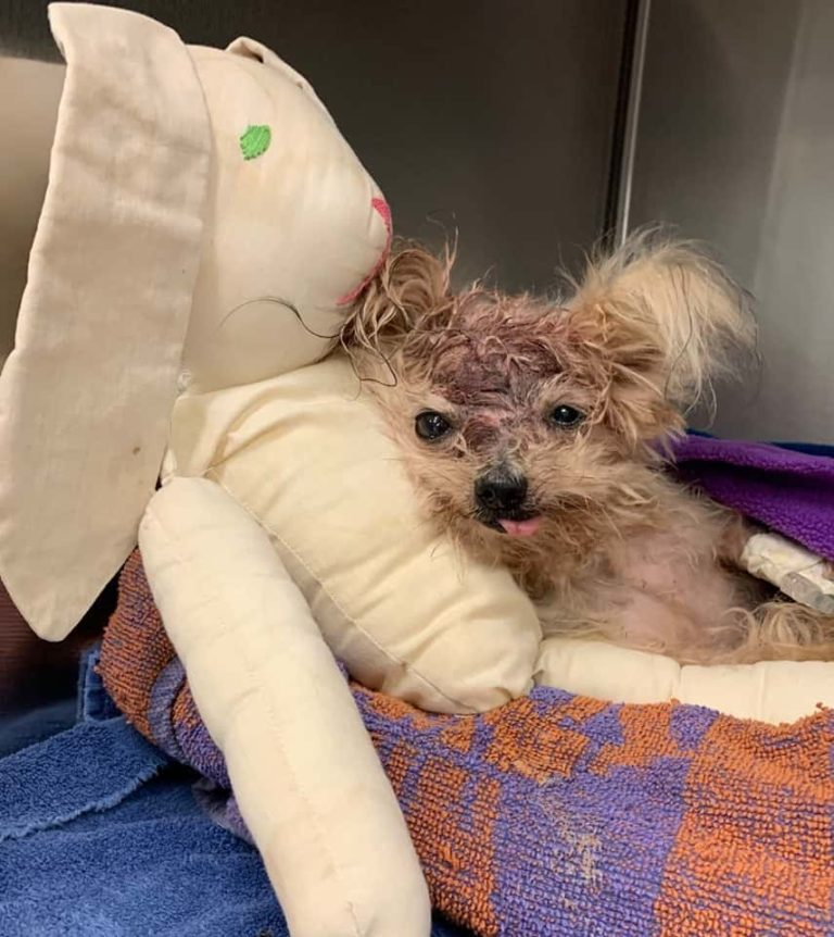 dog was rescued from a trash can