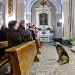 bereaved dog