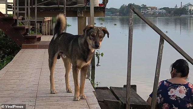 heartbroken dog