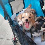 Rescue puppies