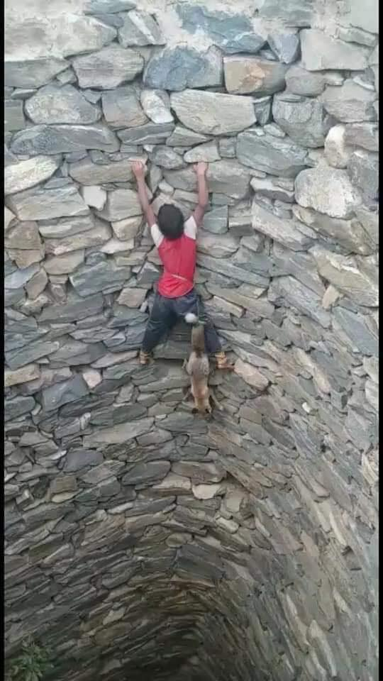 brave heart climbing down to rescuewolf pup