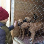 9-year-old-Russian-boy-trades-his-art-for-abandoned-dog-food-and-medicine-5da51eb6dfbb0__700