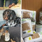 9-year-old-Russian-boy-trades-his-art-for-abandoned-dog-food-and-medicine-5da95a062595c__700
