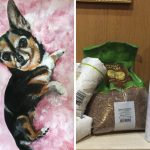 9-year-old-Russian-boy-trades-his-art-for-abandoned-dog-food-and-medicine-5da95f9f50872__700