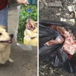 9-year-old-Russian-boy-trades-his-art-for-abandoned-dog-food-and-medicine-5da968575052a__700