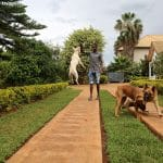 Rwanda's first school for dogs