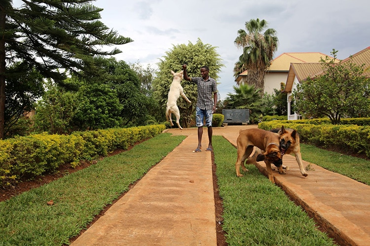 Rwanda's first school for dogs