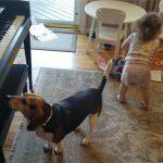 piano-playing dog