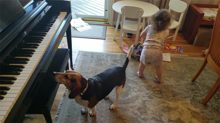 piano-playing dog