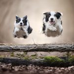 claudio-piccoli-dogs-in-action-7