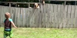 2-year-old son playing with his neighbor's dog