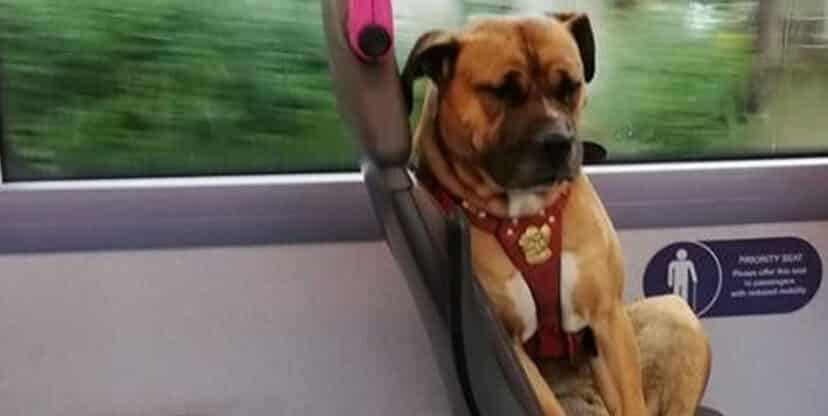 dog boarded a bus