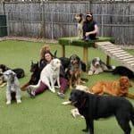 dog-kennel1