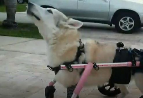 disabled dog was found dead
