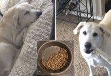dog leaves half her food