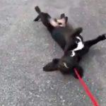 hilarious dog