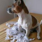 5 most mischievous dog breeds