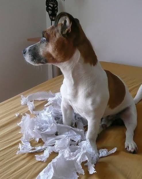 5 most mischievous dog breeds