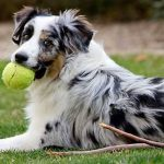 playful dog breeds