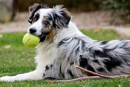 playful dog breeds