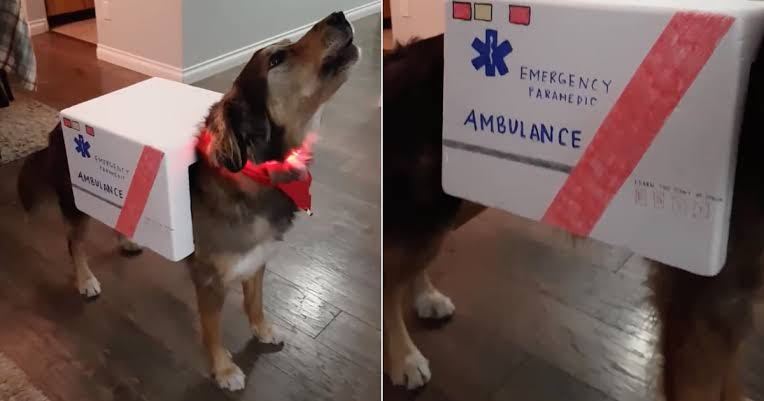 ambulance dog