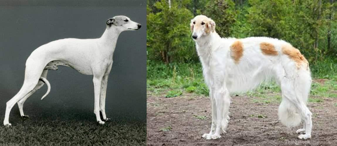 quietest dogs Basenji
