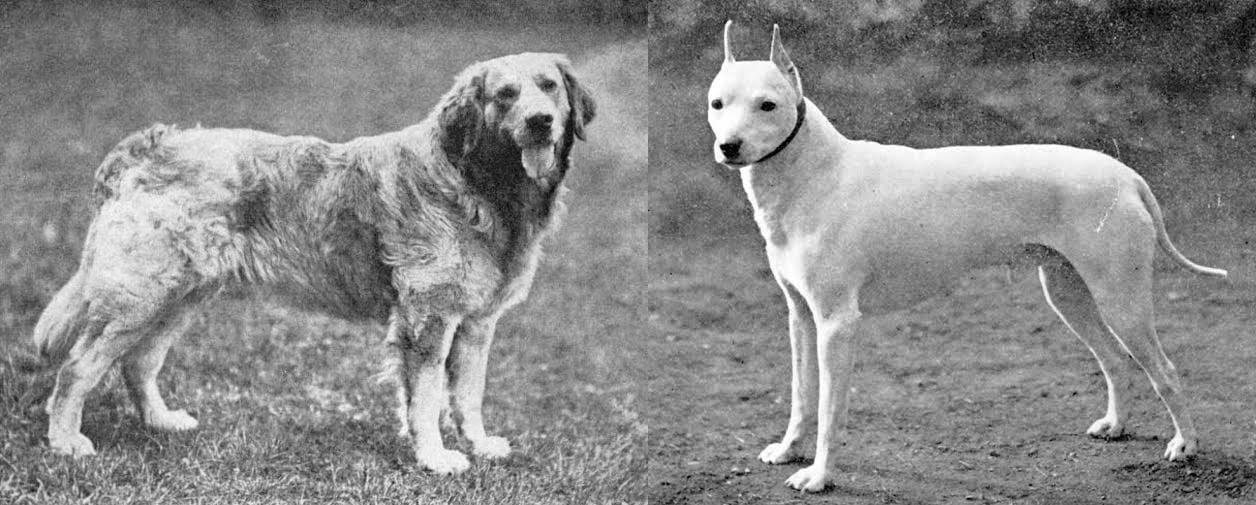 extinct breeds of dogs