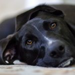 sad-black-dog-4986x3206_68364