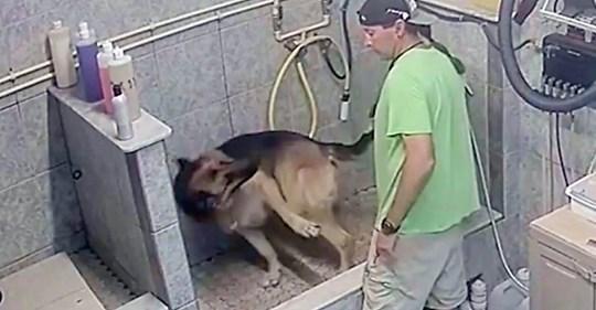 collared dog