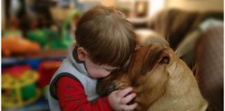 dog-lover quotes