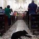 dog on the church altar